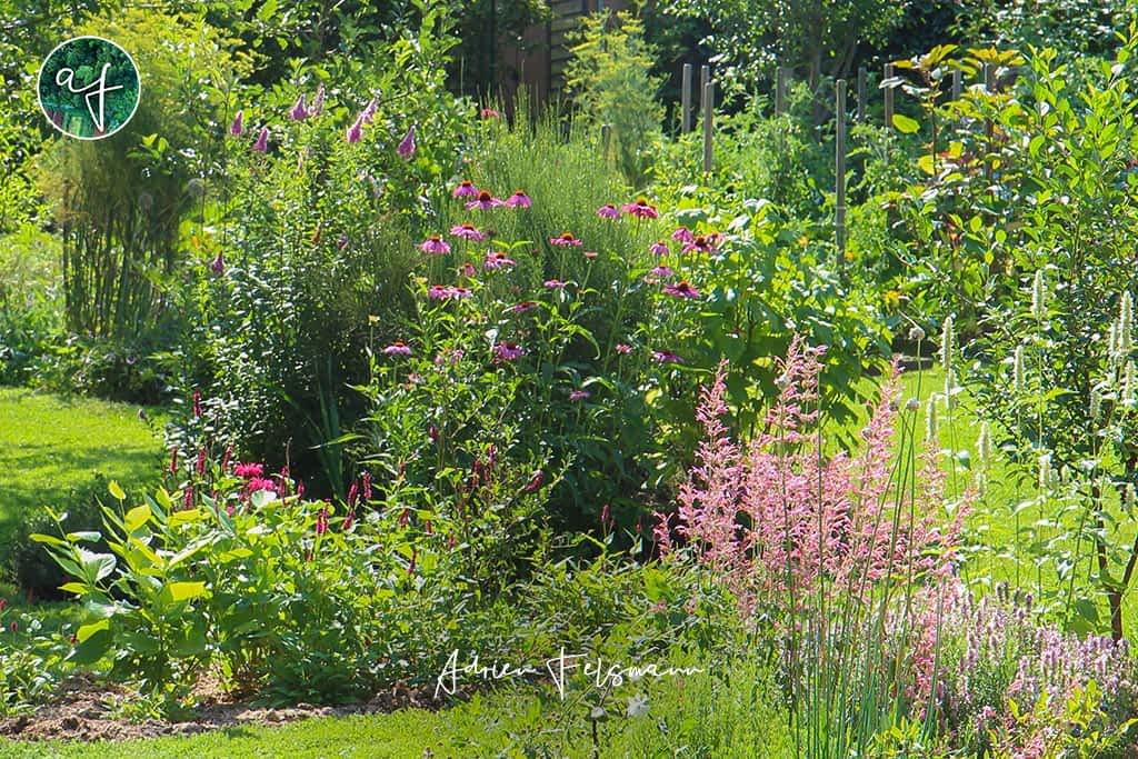 Association de plantes pour papillons