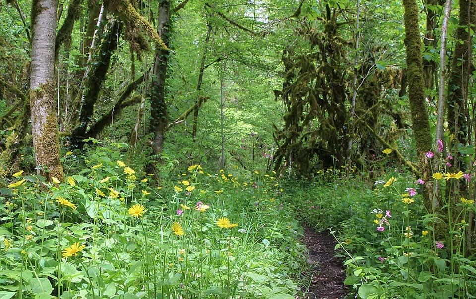 Écosystèmes forestier avec des fleurs sauvages