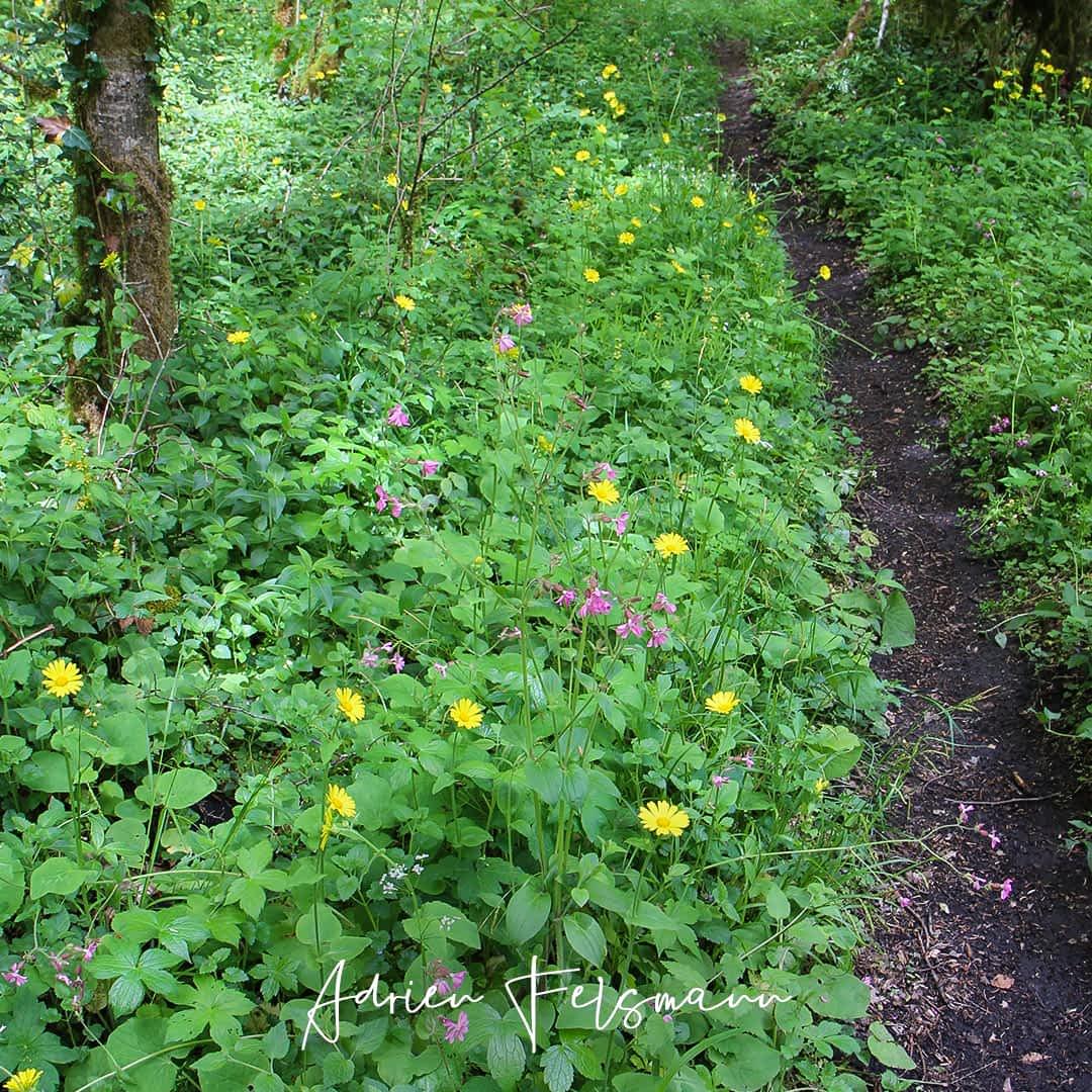 Diversité de plantes et fleurs sauvages en sous-bois