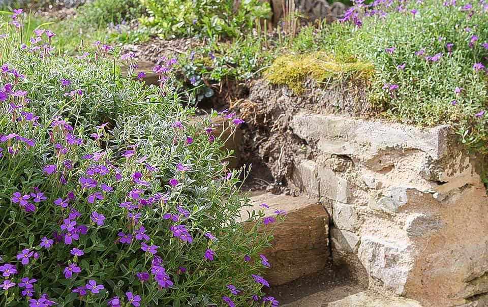 Escalier en bois et plantes saxatiles